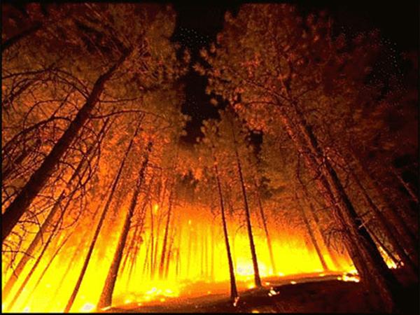 fogo-floresta240212