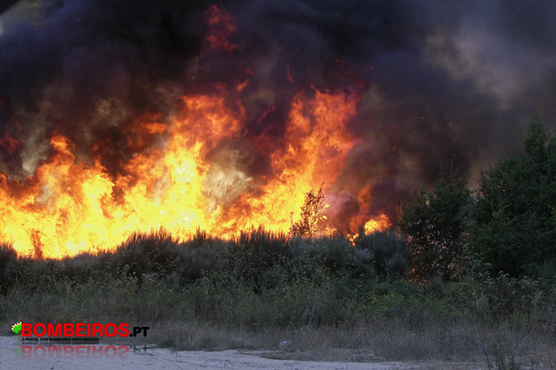 incendio florestal mangualde
