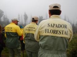 Fonte: Embaixada da Floresta
