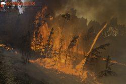 ASG-2842 incêndio florestal leiria