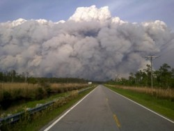 wildfire incêndio pequena imagem