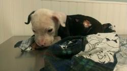 puppy_3591948b