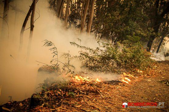 incendio florestal