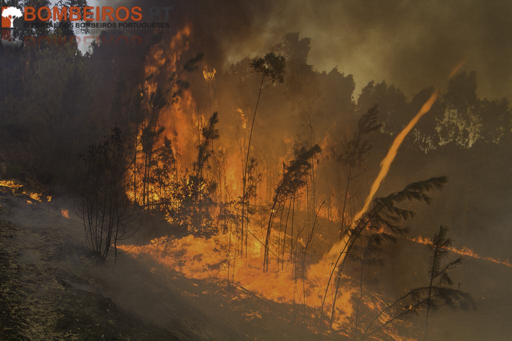Incêndio em Leiria foi planeado um mês antes